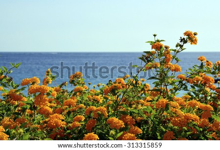 Yellow flowers against blue ocean water and sky close up. - stock photo
