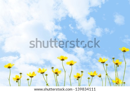 Yellow flowers against the sky - stock photo