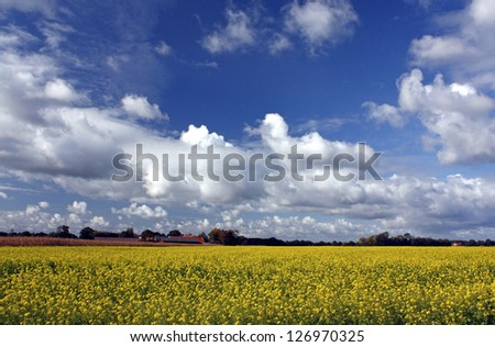 Yellow flowers and blue sky - stock photo