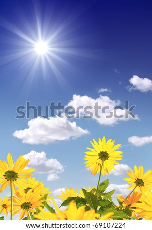 Yellow flowers and bright sun - stock photo