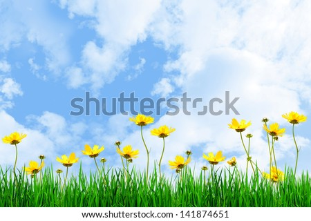 Yellow flowers and Green grass against the sky - stock photo