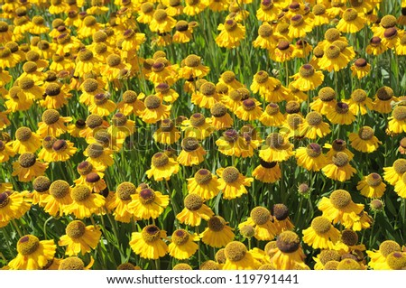 Yellow flowers and green leaves in park in Brussels, Belgium - stock photo