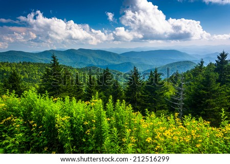 Yellow flowers and view of the Appalachian Mountains from the Blue Ridge Parkway in North Carolina. - stock photo