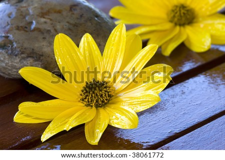 yellow flowers and wood, natural treatment