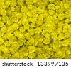 Yellow flowers background - stock photo