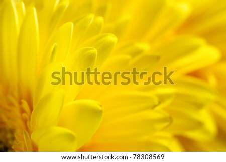 Yellow flowers background, suitable for seasonal (summer or spring) designs, copyspace for text - stock photo