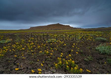 Yellow Flowers Cottonwood Canyon Road Utah Horizontal Composition - stock photo