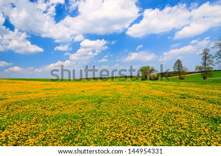 Yellow flowers field rural landscape white clouds blue sky, Hamerlberg, Burgenland, Austria