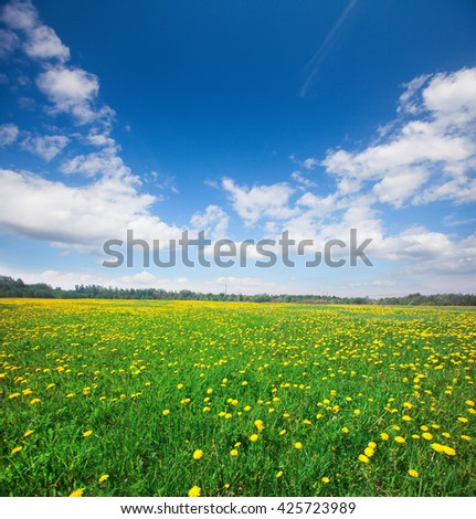 Yellow flowers field under blue cloudy sky - stock photo