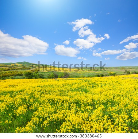 Yellow flowers  field under blue sky