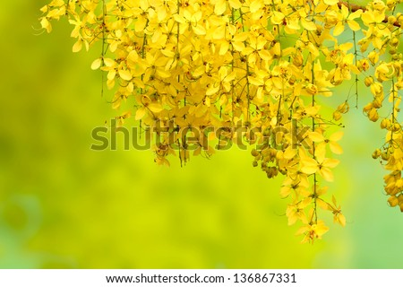 yellow flowers for background - stock photo