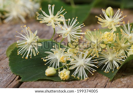 yellow flowers fragrant linden macro on a wooden table. horizontal  - stock photo