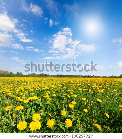 Yellow flowers hill under blue cloudy sky - stock photo