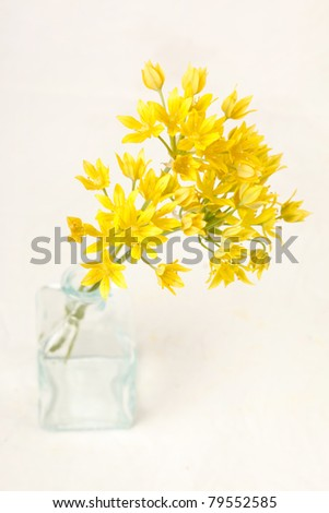 yellow flowers in the vase - stock photo