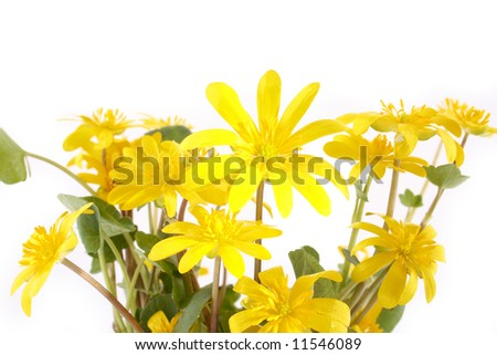yellow flowers in white backgrund