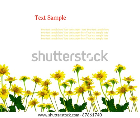 Yellow flowers isolate with space for your text