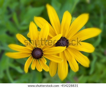 Yellow flowers isolated on green blurred background