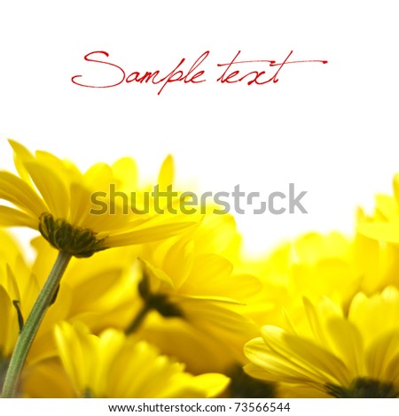 yellow flowers isolated over white background - stock photo