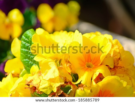 yellow flowers on a dark background