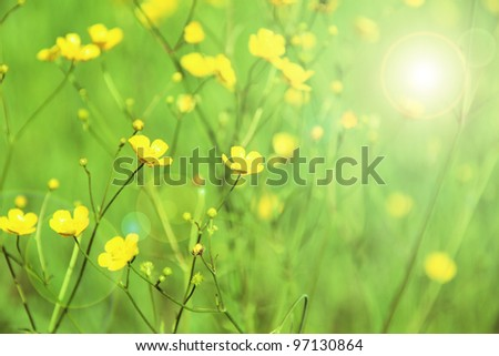 yellow flowers on a green background - stock photo