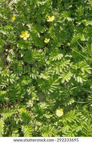 yellow flowers on a green background. summer - stock photo