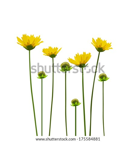 yellow flowers on a white background. congratulation card. Raster - stock photo