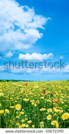 Yellow flowers on field and white clouds on blue sky background.