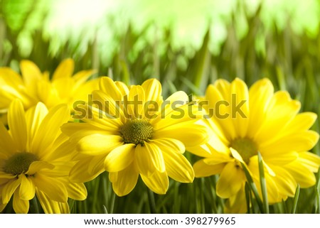 Yellow flowers on green meadow