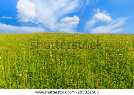 Yellow flowers on green meadow with white clouds on blue sky, Tatra Mountains, Poland
