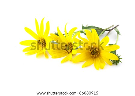 Yellow flowers over white