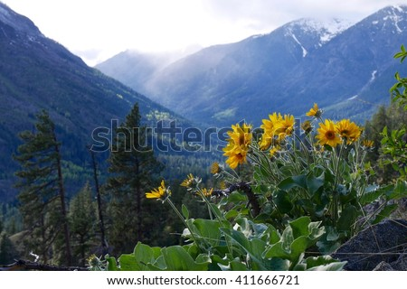 Yellow Flowers, Snow Capped Mountains with Clouds in Spring.  Fourth of July trail near Leavenworth and Seattle, Washington State, USA.  - stock photo