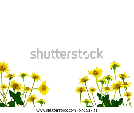 Yellow flowers white background