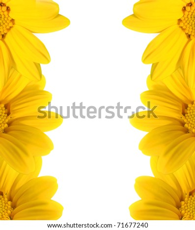 yellow flowers with copy space - stock photo