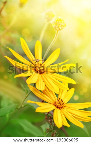 Yellow flowers with flying bee  - stock photo
