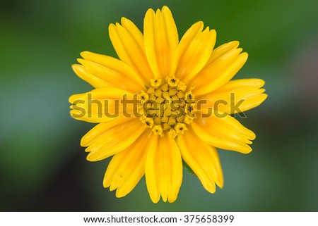 Yellow flowers with green background blur.