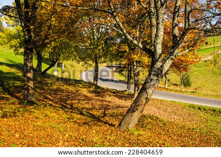 yellow foliage trees near asphalt curvy road which passes through the green shaded coniferous forest in autumn mountains - stock photo