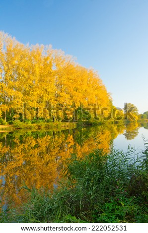 Yellow forest on river coast at autumn - stock photo