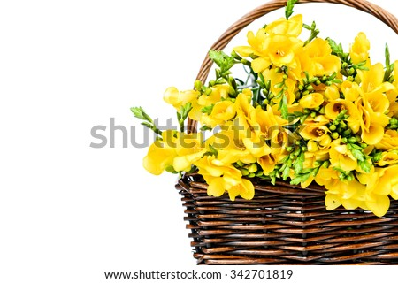 Yellow freesia flowers in the wicker on white background - stock photo