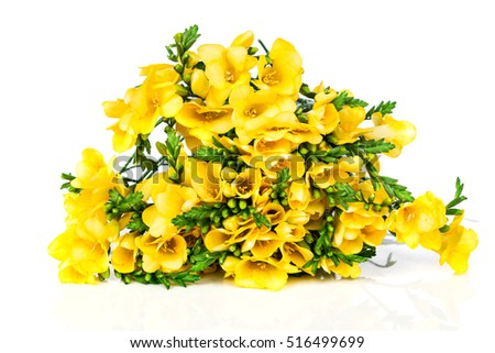 Yellow freesia isolated on white background