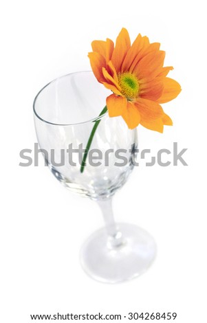 Yellow Gerber flower in an empty glass isolated on a white background - stock photo