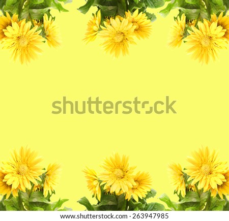 Yellow Gerber with copy space on yellow background - stock photo