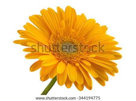 Yellow gerbera flower isolated on white background - stock photo