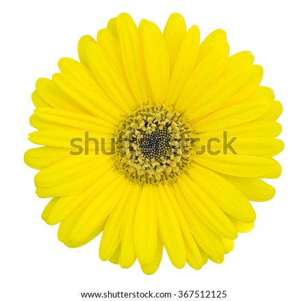 yellow gerbera flower isolated on white with clipping path - stock photo