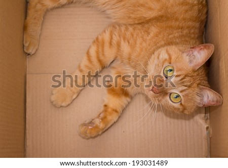 yellow ginger cat in box pet isolated  - stock photo