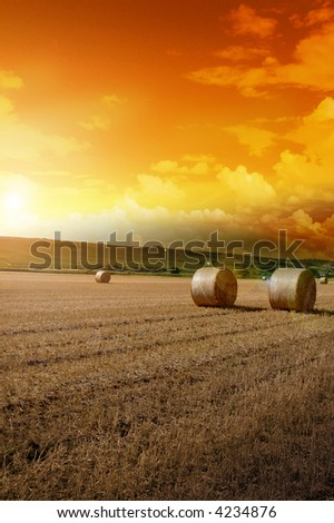 Yellow grain harvested on a farm field