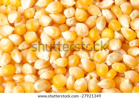 yellow grains of corn with light effects