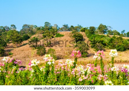 yellow grass land with clear blue sky on day noon light - stock photo