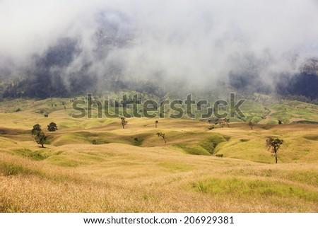 Yellow grass velley on volcano Rinjani, Lombok, Indonesia - stock photo
