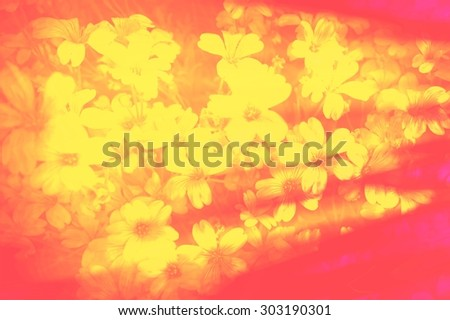 Yellow gypsophila flower smudge blurred soft romantic floral intensive red abstract background