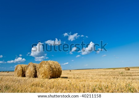 yellow hay on field under blue skies - stock photo